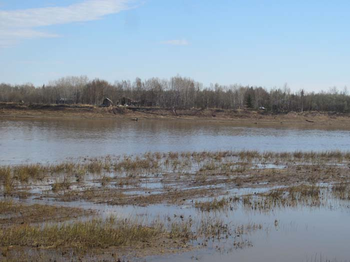 Looking across the slough at virtually no ice on the east bank.