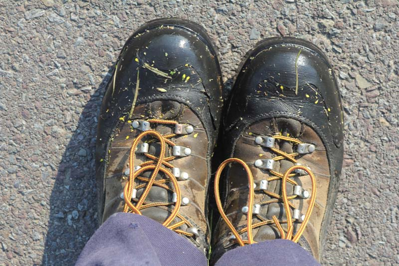 My shoes after tromping through non-native plants of Pennsylvania