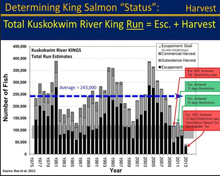 Note the cross hatched bars which represents the subsistence harvest.  The Kuskokwim has the largest king salmon subsistence fishery in the state.