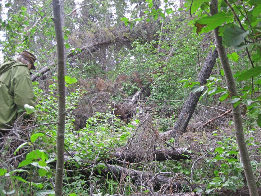 Figure 2: Toppled trees for the 2009 windstorm.