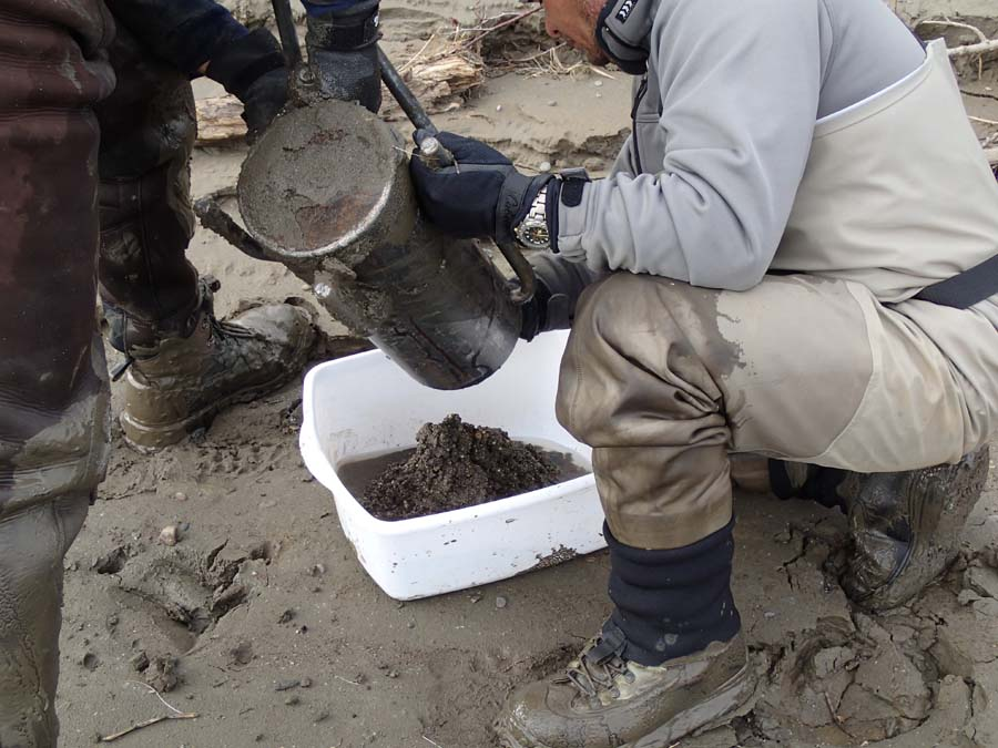Collecting substrate samples in hopes of finding some eggs that indicate where the smelt chose to spawn.