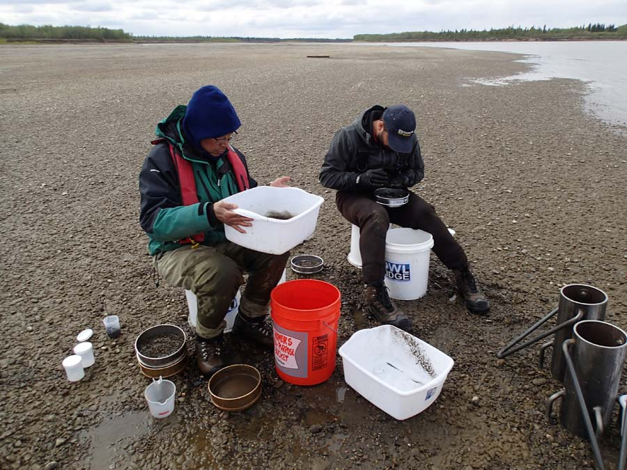 Researchers Glen Johnson and Jim Starkes sorting out the gravel looking for eggs.  (Owl Ridge Research Consultants photo)