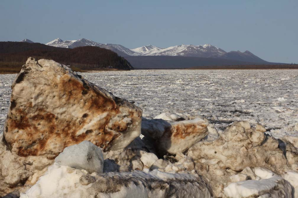 By evening of May 1, the ice from Red Devil and surrounding area was passing through Aniak.