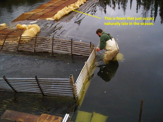 Crew member opening up a weir to make it even easier for fish to pass on upstream.