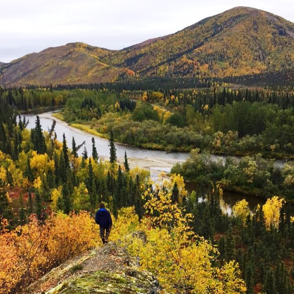 A lone hunter overlooks the Alukaq River Valley near Napaimute (photo courtesy of Audrey Leary)